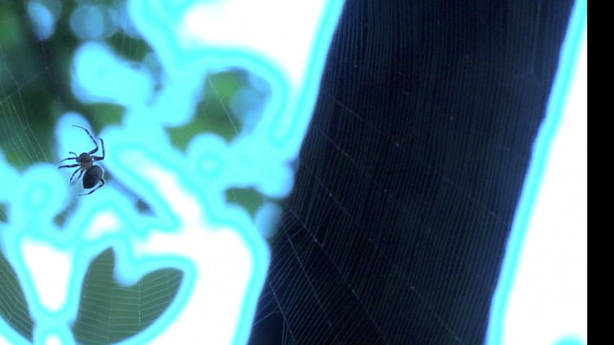 https://stanyakahn.com/files/gimgs/th-11_spider2.jpg